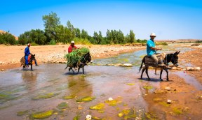 3 camels crossing stream