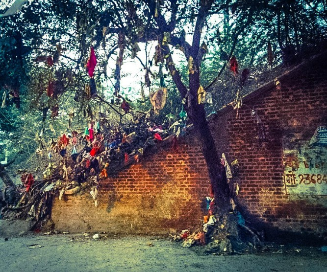 Agra Magic Tree