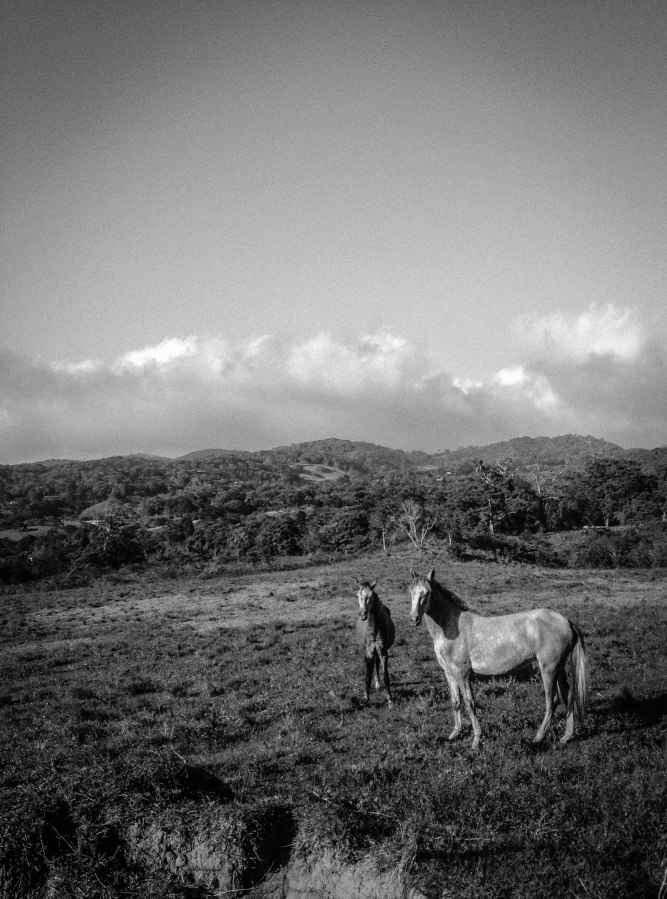 2 horses-3