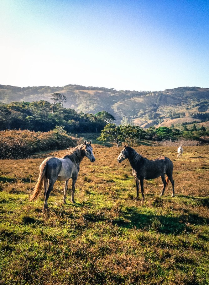 2 more horses-4