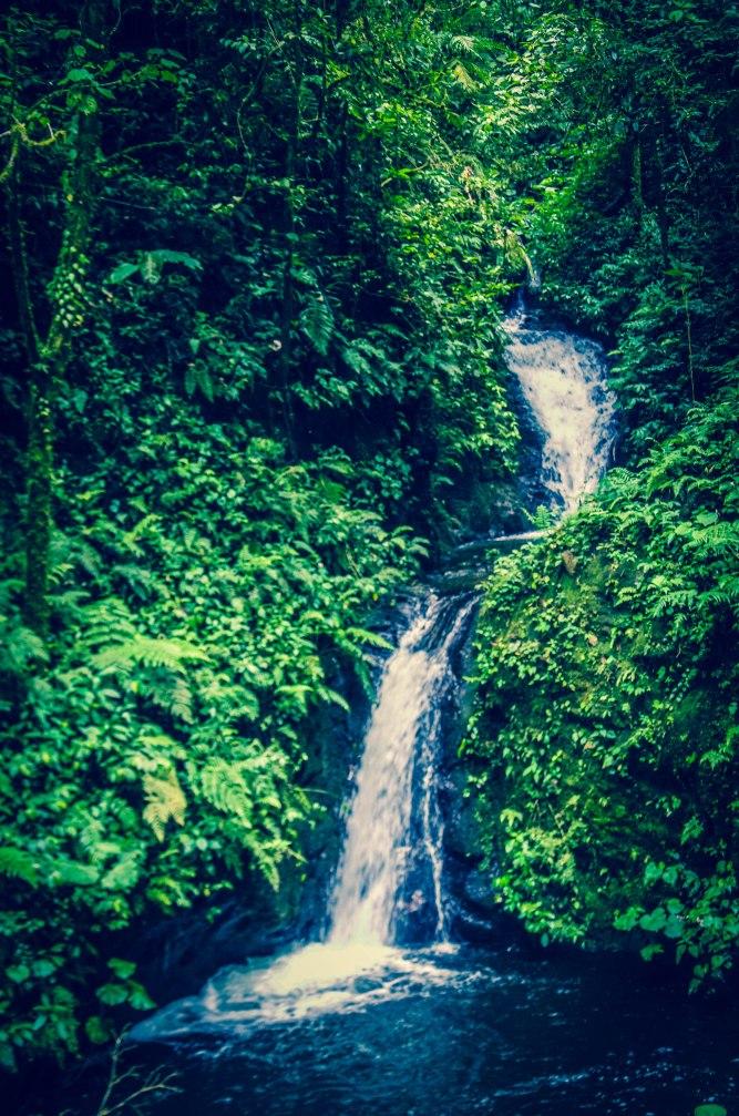 Monteverde-115