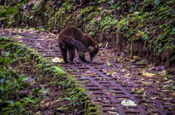 Monteverde-76
