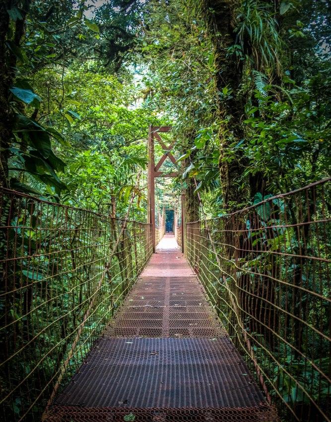 Monteverde-89