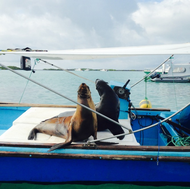 Sea Lions on a Boat